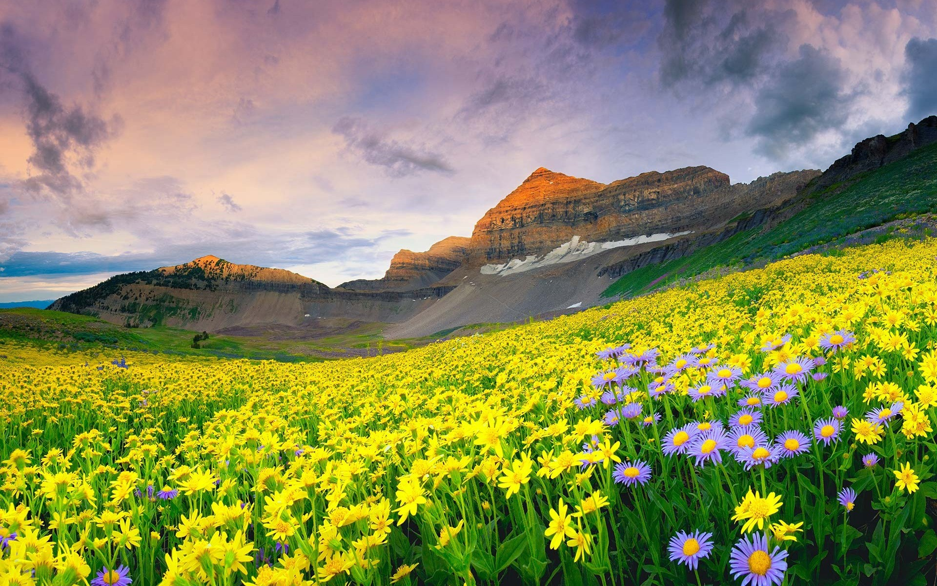 Fake Pictures of valley of flowers